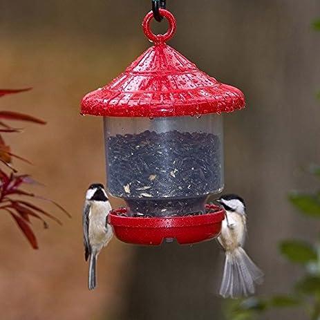 Amazon Songbird Essentials SE7013 Clinger ly Bird Feeder