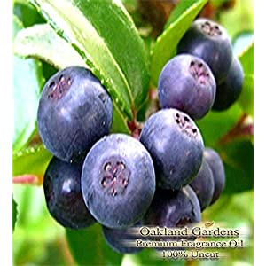 BULK Fragrance Oil - HUCKLEBERRY Fragrance Oil - A bouquet reminiscent of blueberry with raspberry, grape, strawberry and peach top notes with a sweet background - By Oakland Gardens (120 mL - 4.0 fl oz Bottle)
