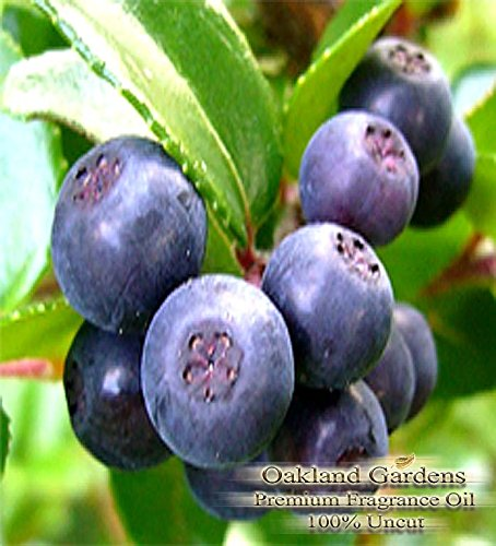 BULK Fragrance Oil - HUCKLEBERRY Fragrance Oil - A bouquet reminiscent of (Huckleberry Lotion)