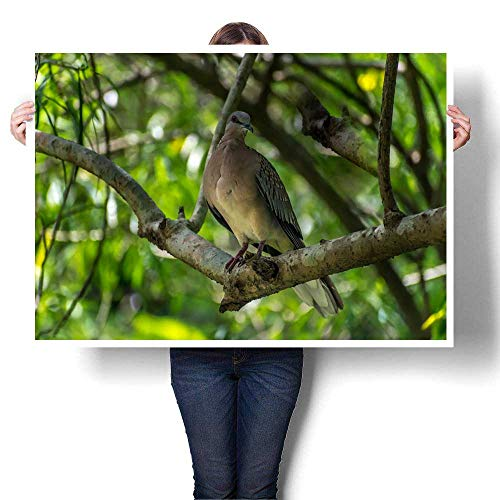 Canvas Wall Art Singing Bird in a Branch Against Morning Sunlight Cute Bird tit Sitting on Tree Branch in Spring Garden Decorative Fine Art Canvas Print Poster K 48