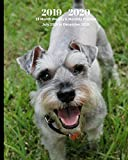 2019 - 2020 | 18 Month Weekly & Monthly Planner July 2019 to December 2020: Miniature Schnauzer Dog Breed Pets Animals Vol 67 Monthly Calendar with ... Holidays- Calendar in Review/Notes 8 x 10 in.