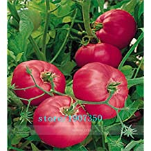 Rare Brand Boy Hybrid Rose Pink Big Tomato Seeds, Professional Pack, 100 Seeds / Pack, Tasty Rich Brandywine Flavor Tomato
