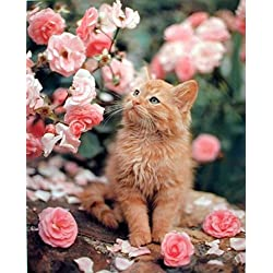 Cute Cat La Perm Roses Richard Stockton Wall Art Print Poster (16x20)