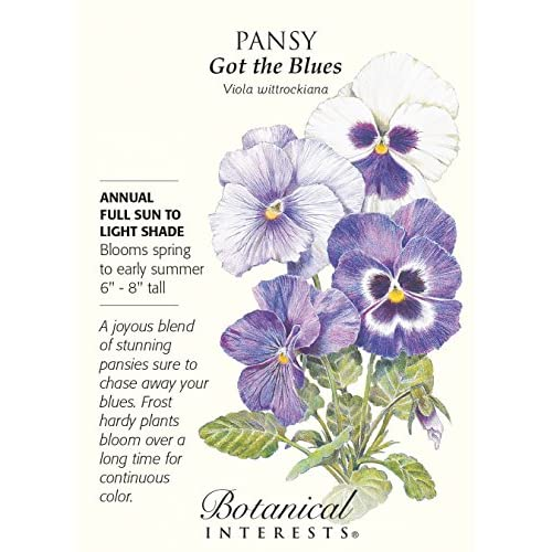 'Got the Blues' Pansy Seeds - 200 mg - Annual free shipping