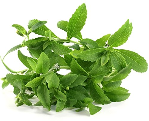 Semi di Stevia Stevia rebaudiana
