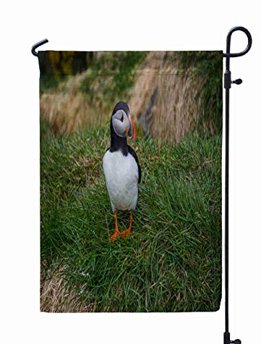 (Shorping Welcome Garden Flag, 12x18Inch Beautiful Wild in Icelandic Village Borgarfjordur Eystri for Holiday and Seasonal Double-Sided Printing Yards)