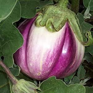 Eggplant Italian Rosa Bianca Vegetable Seeds (Solanum Melongena) 30+Seeds