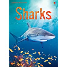 Sharks: For tablet devices (Usborne Beginners)