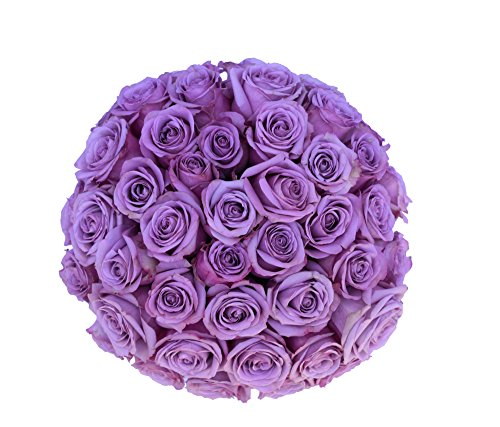 2 Dozen Farm Fresh Purple Roses Bouquet By JustFreshRoses | Long Stem Fresh Purple Rose Delivery | Farm Fresh Flowers by justFreshRoses