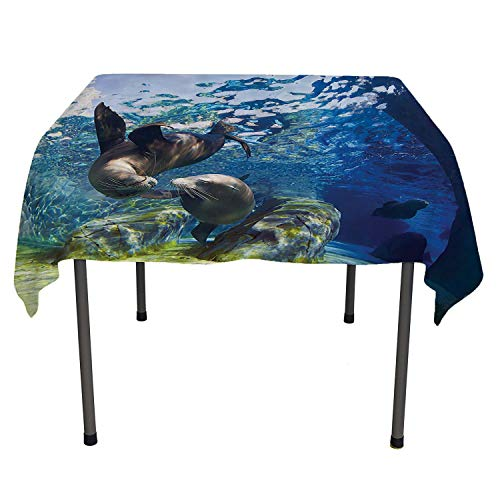 - Sea Animals Decor Table Cloths Spill Proof Playful California Sea Lions Swimming in Clear Water Undersea World Theme Decoration Navy Lime Kitchen Items Spring/Summer/Party/Picnic 60 by 90