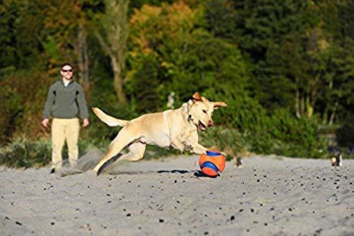 Canine Hardware Chuckit Kick Fetch Ball Large