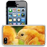 iphone 5 chicken - MSD Apple iPhone 5/iPhone 5S/iPhone SE Clear case Soft TPU Rubber Silicone Bumper Snap Cases iPhone5/5S IMAGE 19649370 Chicken