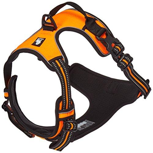 Ux M Jabl on Orange Dog Collar And Leash