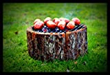 Disposable Ready to Use Charcoal Wooden Eco-grill