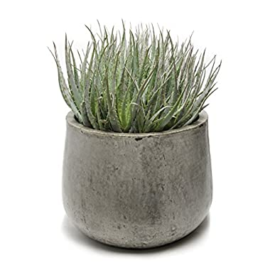 Repose Samai Succulent Planter, X-Large