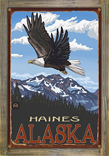 Haines Alaska Eagle Soaring Rustic Metal Print on Reclaimed Barn Wood by Paul A. Lanquist (12
