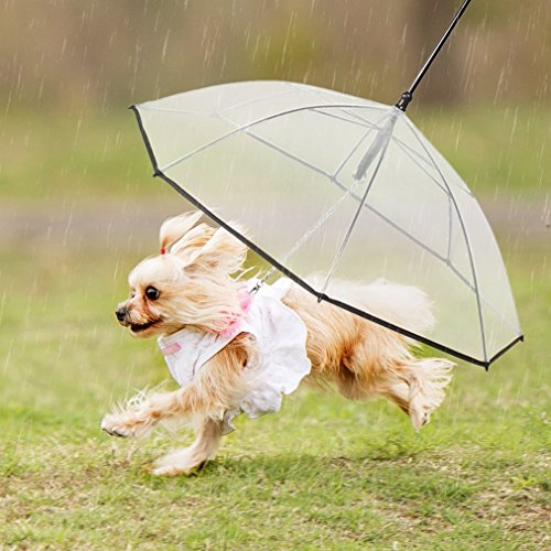 51Uxxju9hxL - Pet Dog Umbrella With Leash - NiceHyacinth Easy View Clear Transparent Folding Puppy Umbrella for Small Dogs Puppies 20 Inches Back Length - Provides Protection from Rain Snow Wet Weather