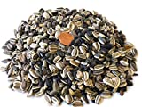 Bulk Sunflower Seeds - Variety Mix 10 Types of Beautiful Sunflowers - 1 Pound Bag Open Pollinated Sunflower Seeds for Planting