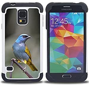 - blue tropical bird grey feather branch - - Doble capa caja de la armadura Defender FOR Samsung Galaxy S5 I9600 G9009 G9008V RetroCandy