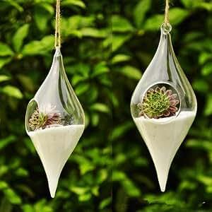 wu-di forma de oliva florero terrario Casa Boda Navidad D ¨ ¦ cor