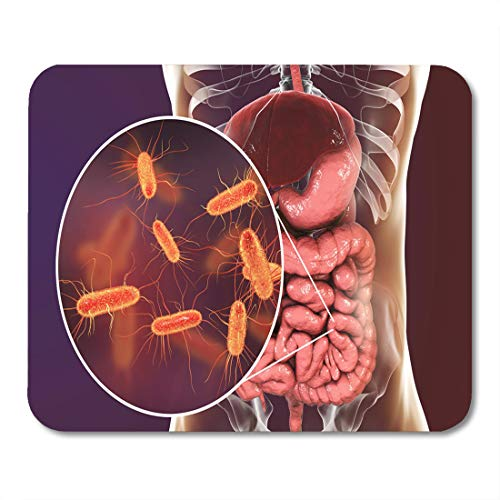 """Emvency Mouse Pads Intestinal Microbiome 3D Showing Anatomy of Human Digestive System Mouse Pad for notebooks, Desktop Computers mats 9.5"""" x 7.9"""" Office Supplies"""