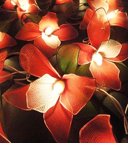 GaanZaLive36 Thai Handmade 20 Romantic Orchid Handmade Flower Fairy String Lights Patio Wedding Party Vanity Kid Wall Lamp Floral Home Decor 3m (Cute Betty Boop Halloween Costumes)