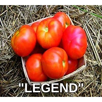 "200 + Seeds Organic""Legend"" One of Best Tomatoes : Garden & Outdoor"