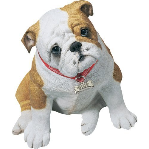Sandicast Fawn Bulldog - 9