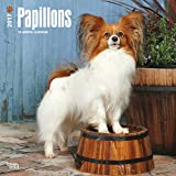 Papillons Dogs Wall Calendar 2017 {jg} Best Holiday Gift Ideas - Great for mom, dad, sister, brother, grandparents, , grandchildren, grandma, gay, lgbtq.