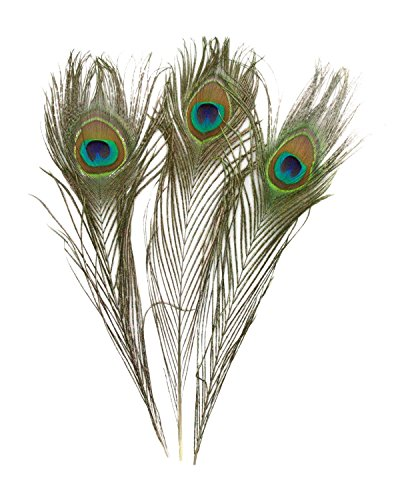 CJESLNA 100 PCS Real Natural Wholesale Peacock Feathers, 10 to (Peacock Feathers Bulk)
