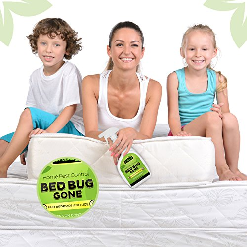 How To Get Rid Of Bed Bugs In Kuwait