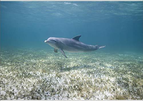 Media Storehouse A1 Poster of Bahamas, Grand Bahama Island, Freeport, Captive Bottlenose Dolphin (Tursiops (11112256)