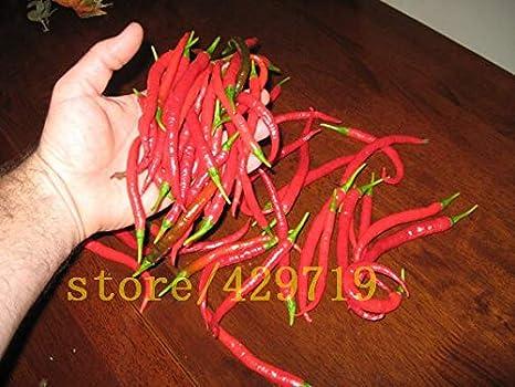 150 Unids Mini Semillas de Pimiento Muy Picante Semillas de Chile Chile Semillas de Verduras y Frutas Para el Hogar Bricolaje Jardín Plantación