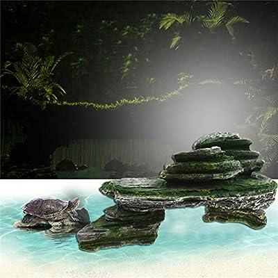 gengyouyuan Escalera Plataforma de Secado Tortuga Tortuga pequeña Pecera de paisajismo Decoracion: Amazon.es: Productos para mascotas
