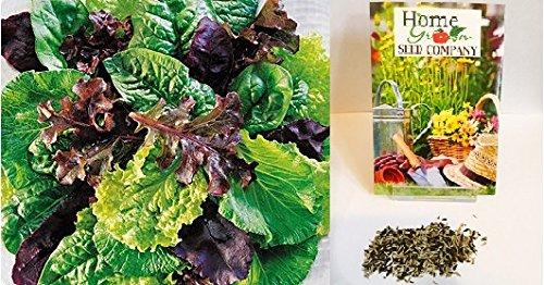 Homegrown Lettuce Seeds, 1500 Seeds, Organic Mesclun Salad Mix