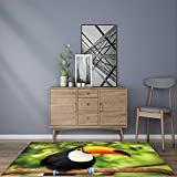 Extra Thick Comfortable Rug Colorful tucan in the aviary for Living Room Dining Room Family 5' X 7'