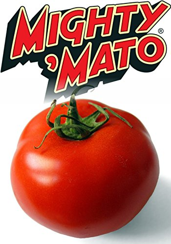 Mighty 'Mato Grafted Big Beef Tomato Plant - Easy to Grow/More Fruit - 4
