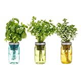 Italian Herb Kit - Three Self-watering Indoor Planters with Organic Basil, Organic Parsley, and Non-gmo Oregano Seeds.