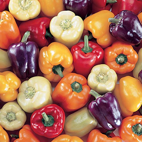 (Burpee Carnival Mix Hybrid (Organic) Sweet Pepper Seeds 100 seeds)