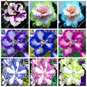 - 100 pcs/bag Rare african violet seeds, bonsai flower seeds, garden flowers violet seeds perennial herb plant pot for home garden