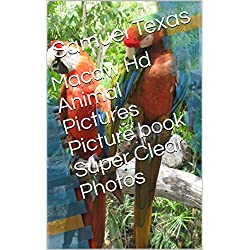 Macaw Hd Animal Pictures Picture book Super Clear Photos
