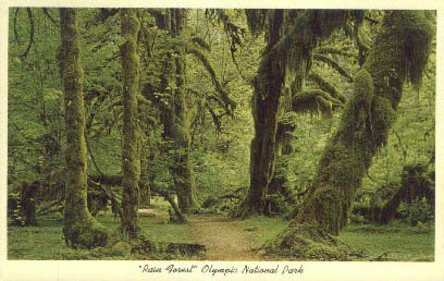 Olympic National Park, Washington Postcard from Old Postcards