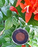 Colonial Christmas Village - Revolutionary Era 1770- 1775 Coin Ornament