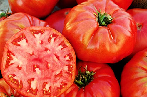1/4 oz Tomato Seeds, Mortgage Lifter, Non-GMO Heirloom Tomatoes, Huge! 2,500ct