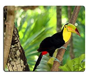 Nature Birds Toucans Tropical Animal Mouse Pads Customized Made to Order Support Ready 9 7/8 Inch (250mm) X 7 7/8 Inch (200mm) X 1/16 Inch (2mm) High Quality Eco Friendly Cloth with Neoprene Rubber MSD Mouse Pad Desktop Mousepad Laptop Mousepads Comfortable Computer Mouse Mat Cute Gaming Mouse pad