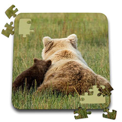 Mother Grizzly Bear - Danita Delimont - Bears - Young grizzly cub leans against its mother. Lake Clark NP, Alaska. - 10x10 Inch Puzzle (pzl_278406_2)