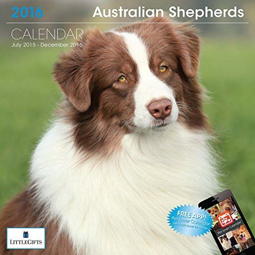 LittleGifts Australian Shepherd 2016 Calendar (1223)