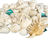 Tumbler Home Mix of Seashells with Sea Glass - Set Includes White Shells up to 4 inches - Home Decor, Wedding,
