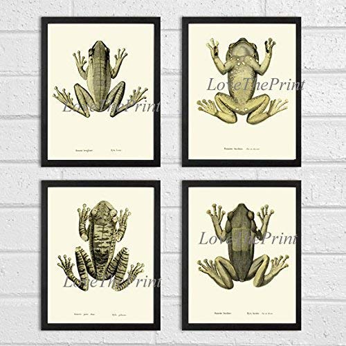 - Frog Art Print SET of 4 Beautiful Antique Frogs Country Pond Nature Natural Science Illustration Chart Room Wall Home Interior Decor Unframed DFM