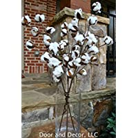 Rustic Cotton Stems with 15 to 18 Cotton Bolls per Stem and 30-32 inches Tall Farmhouse Style